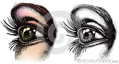 Illustrazione dell occhio