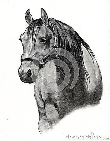 Illustrazione di matita del cavallo del bambino fotografie for Disegni di cavalli a matita