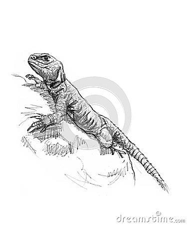 Illustrazione di una lucertola