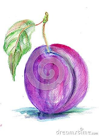 Ilustração estilizado da ameixa