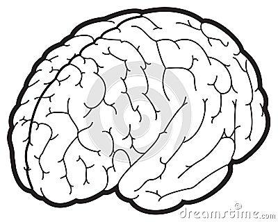 Ilustração de um cérebro