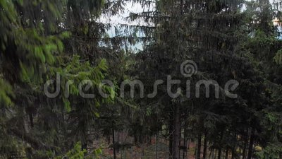 4.000 imágenes de drones de bosque en la montaña polaca almacen de video