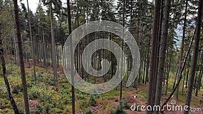 4.000 imágenes de drones de bosque en la montaña polaca metrajes