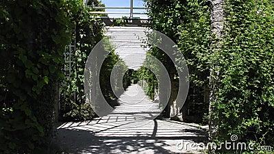 Im botanischen Garten von München, Deutschland, befindet sich eine schattenspendende Allee, umgeben von üppiger Vegetation stock footage