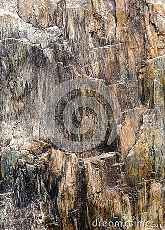 Image abstraite de la surface en bois fossile