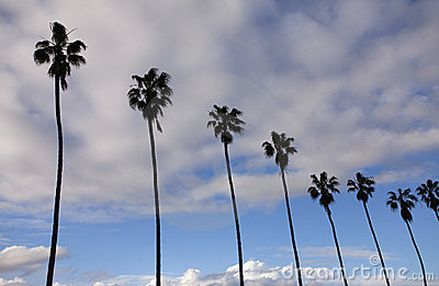 Image of beautiful palm trees