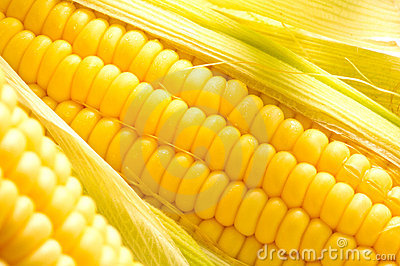 Image of Corn ears
