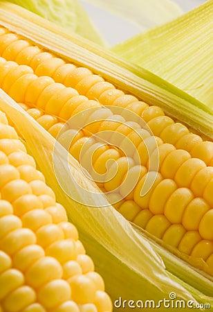 Image of Corn ears