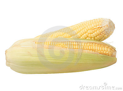 Image of Corn ears on white background