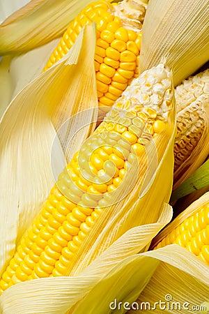 Image of Corns