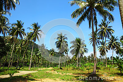 Image of cultivated palms