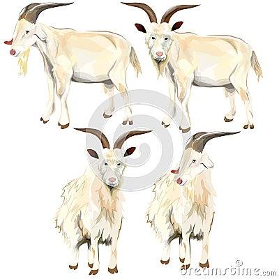 Image of goat.