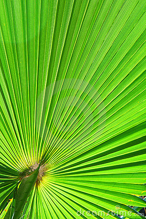 Image of green palm leaf