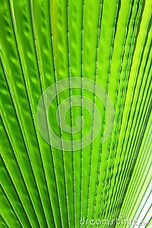 Image of green palm leaf closeup