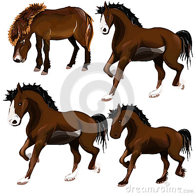 Image of horse.