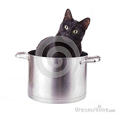 Image humoristique d 39 un chat noir se reposant dans un - Curieux comme un pot de chambre ...