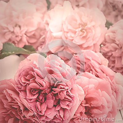 Free Image Of Romantic Pink Roses, Vintage Stylized With Matte Effect Stock Photos - 97441723