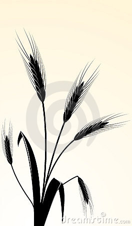 Free  Image Of Wheaten Ears Stock Photo - 11772420