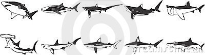 Image Set of Sharks