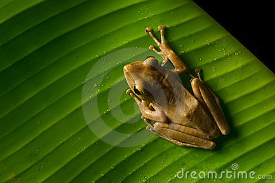 Image of small frog