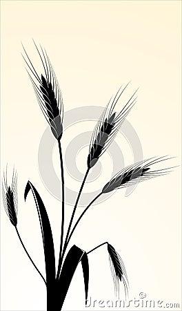 image of wheaten ears