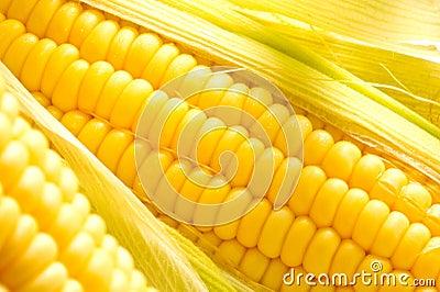 Imagen de los oídos de maíz