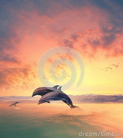 Free Imaging Scene Of Dolphin Jumping Through Sea Water Royalty Free Stock Image - 113901956
