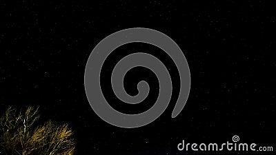 Imponujące gwiazdkowe nocne niebo nad dzikim drzewem, ruch gwiazdy wszechświata rotacja ziemi zdjęcie wideo