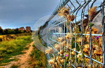 Imprisoned Flowers