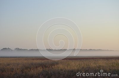 Summer mist over a field of wild flowers Stock Photo