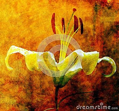 Improvisieren Sie Abbildung der Lilie