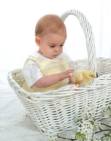 Free In A Basket With A Chicken Stock Photography - 4726022