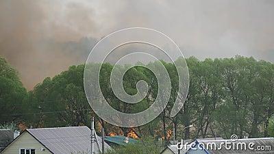 Inc?ndio florestal forte, fumo pesado e fogo aberto filme