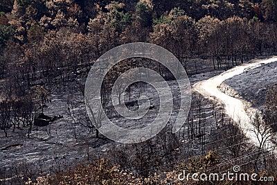 Incêndio selvagem da floresta
