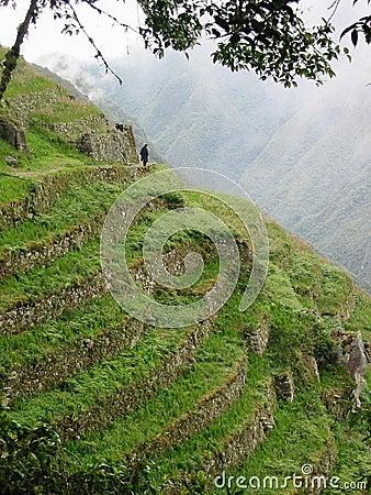 Inca Ruins - Terraced Slope