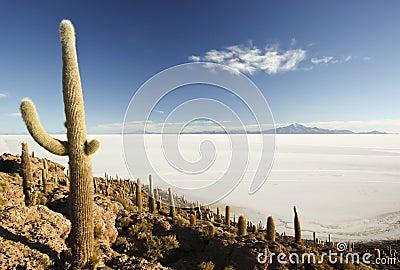 Incahuasi Insel