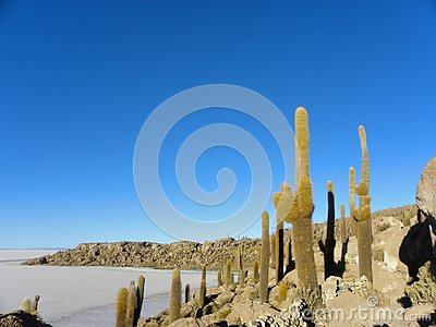 Incahuasi Island. Salar de Uyuni. Bolivia.