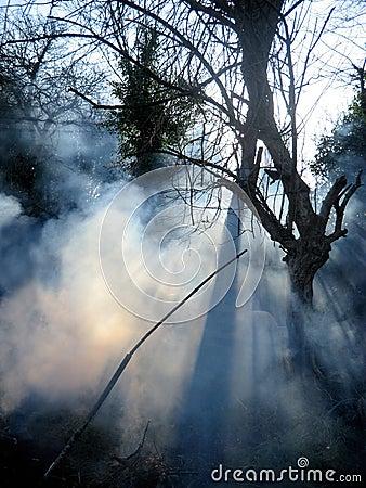 http://thumbs.dreamstime.com/x/incendie-dans-une-for%C3%AAt-une-fum%C3%A9e-et-une-lumi%C3%A8re-du-soleil-13040591.jpg