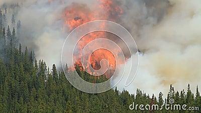 Incendie de forêt avec les flammes très grandes