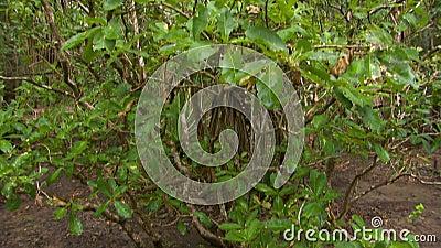 Inclinação acima de um arbusto nas madeiras video estoque