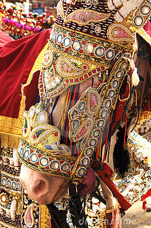 India Jaipur decorated horse for a wedding