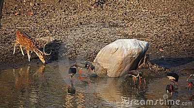 India Watering Hole