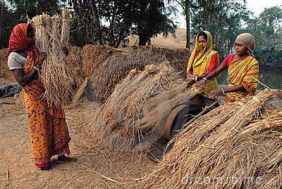 Indian Agriculture Editorial Photo