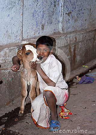 Indian boy and his calf Editorial Photography