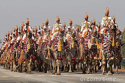 Indian Camels on Parade Editorial Photo