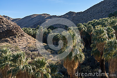 Indian Canyon, Palm Springs, California