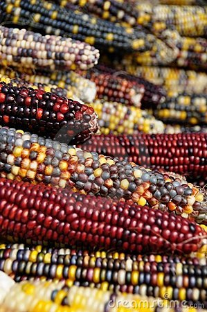 Indian Corn #2