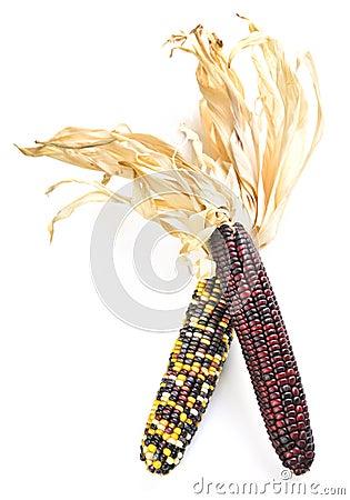 Free Indian Corn Stock Photos - 6368783