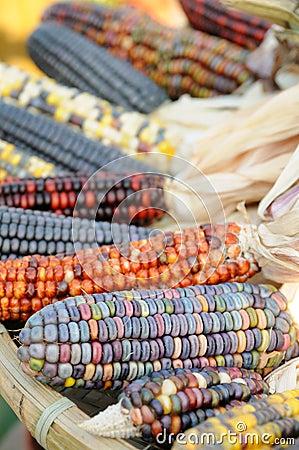 Free Indian Corn Close Up Stock Photo - 7799450