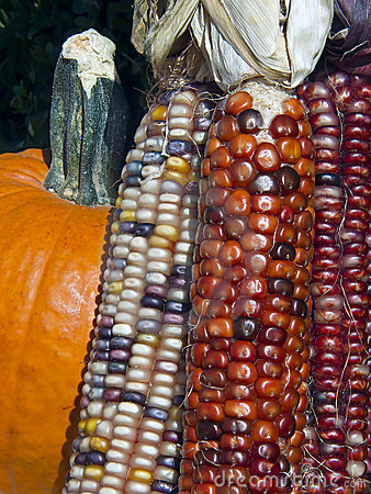 Indian Corn And Pumpkin Stock Image - Image: 16361781